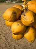Kokosnötter på en ställning på stranden Arkivbilder