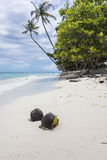 Kokosnötter på en tropisk vit sandstrand Arkivbilder