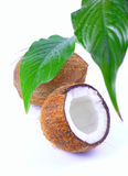 Kokosnuss Stockfoto
