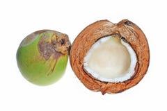 Kokosnuss Stockfotos