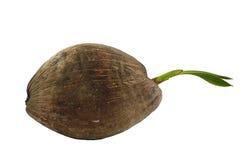Kokosnuss Lizenzfreie Stockfotos