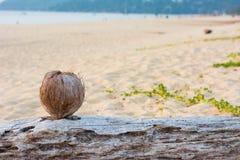 Kokosnuss auf dem Andaman-Strand mit Sonnenuntergang Stockfotografie