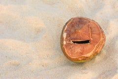Kokosnuss auf dem Andaman-Strand mit Sonnenuntergang Lizenzfreie Stockbilder