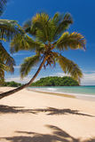 Kokosnuss auf dem Strand Lizenzfreies Stockbild