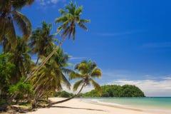 Kokosnuss auf dem Strand Stockbild