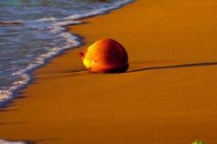 Kokosnuss auf dem Strand Stockfoto