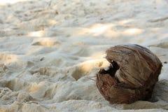 Kokosnuss auf dem Strand Lizenzfreies Stockfoto