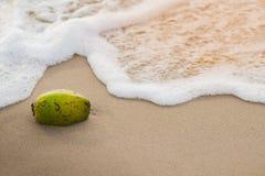 Kokosnuss auf dem Strand mit Welle und Sonnenschein stockbild