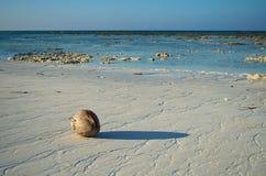 Kokosnuss auf dem weißen korallenroten Strand lizenzfreie stockfotografie