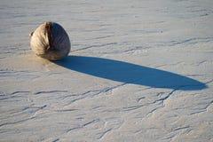 Kokosnuss auf dem weißen korallenroten Strand stockfotografie
