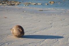 Kokosnuss auf dem weißen korallenroten Strand stockfotos