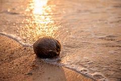 Kokosnuss auf einem Strand Lizenzfreie Stockfotografie