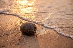 Kokosnuss auf einem Strand Lizenzfreie Stockfotos
