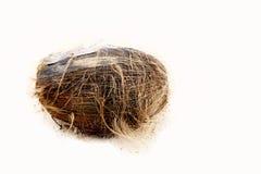 Kokosnuss auf einem Strand Stockfotos