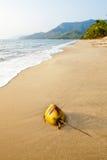 Kokosnuss auf einem Strand Port Douglas australien Lizenzfreies Stockbild