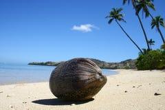 Kokosnuss auf einem tropischen Strand Stockfoto