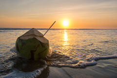 Kokosnuss auf einem tropischen Strand bei Sonnenuntergang Stockbild