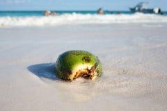 Kokosnuss auf karibischem Strand Tulum Mexiko Stockbild