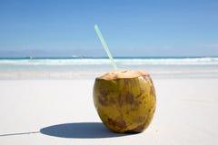 Kokosnuss auf karibischem Strand Tulum Mexiko Stockfotografie