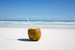 Kokosnuss auf karibischem Strand Tulum Mexiko Lizenzfreies Stockfoto