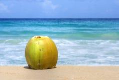 Kokosnuss auf sonnigem karibischem Strand Lizenzfreie Stockfotografie