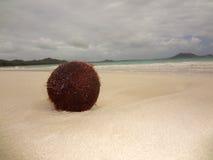 Kokosnuss auf Strand lizenzfreies stockfoto