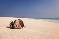 Kokosnuss auf tropischem Strand Stockfotografie