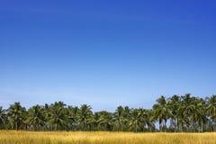 Kokosnuss-Bäume Lizenzfreies Stockbild
