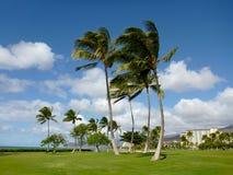 Kokosnuss-Bäume auf Rasenfläche im Park bei Ko Olina Stockfotografie