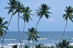 Kokosnuss-Bäume durch das Meer Lizenzfreie Stockfotos