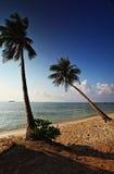2 Kokosnuss-Bäume Karimunjava Stockfotografie