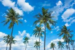 Kokosnuss-Bäume mit Nizza blauem Himmel und Wolken Lizenzfreies Stockfoto