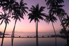 Kokosnuss-Bäume am Sonnenaufgang Lizenzfreie Stockfotografie