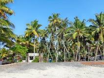 Kokosnuss-Bäume am Strand Stockbild
