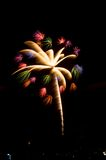 Kokosnuss-Baum-Feuerwerk Stockbilder