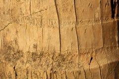 Kokosnuss-Baum-Haut-Hintergrund Lizenzfreies Stockfoto