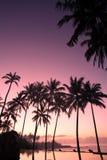 Kokosnuss-Baum am Sonnenaufgang Stockbild