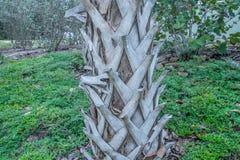 Kokosnuss-Baum-Stamm am Strand Lizenzfreies Stockbild