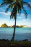 Kokosnuss-Baum und Insel stockfotos