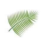 Kokosnuss-Blatt-Ikone Lizenzfreies Stockfoto