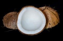 Kokosnuss in der tropischen Zone, Thailand Lizenzfreies Stockbild