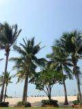 Kokosnuss drei Lizenzfreies Stockbild