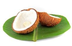 Kokosnuss für Koch Stockfoto