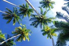 Kokosnuss herauf Winkel Stockfoto