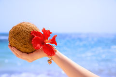 Kokosnuss-Hibiscusblume in der Hand Stockfotografie