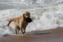 Kokosnuss-Hund Lizenzfreie Stockfotos
