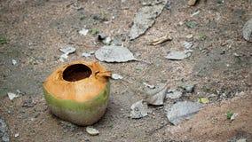 Kokosnuss im Garten stockfoto