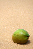 Kokosnuss im Sand Stockfotos