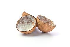 Kokosnuss lokalisiert auf weißem Hintergrund Lizenzfreies Stockfoto