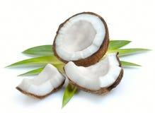Kokosnuss mit Blättern stockbilder